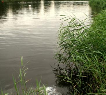 *UPDATE:  Open water swimming